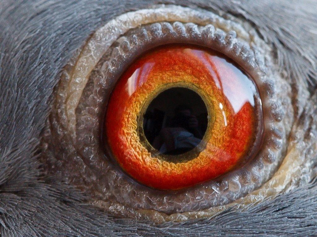 Eyesign – An Alternative View