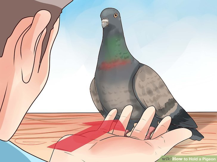 92760=4643 Hold a Pigeon Step 2