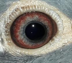 Eye Jan 10 Zoe